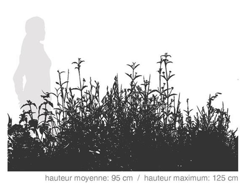 Plantes mellifères vivaces / SÉRIE AGRI