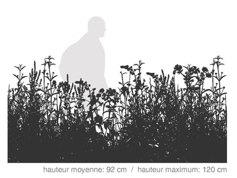 Maxi Couleurs / SÉRIE DÉCOR