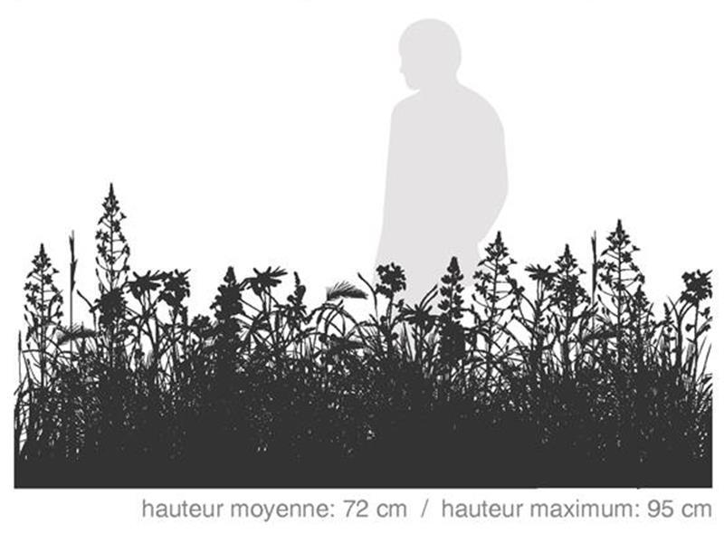 Maxi Couleurs du Nord /  SÉRIE DÉCOR