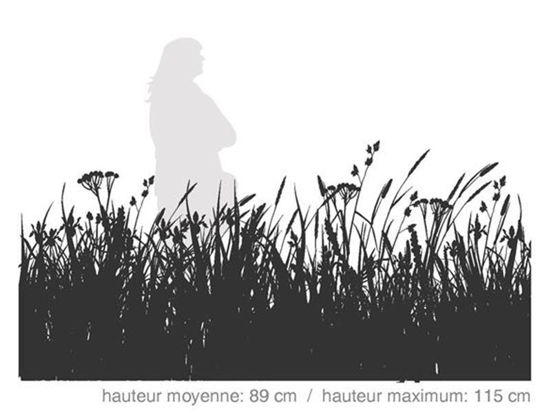Milieux Humides / SÉRIE HABITAT