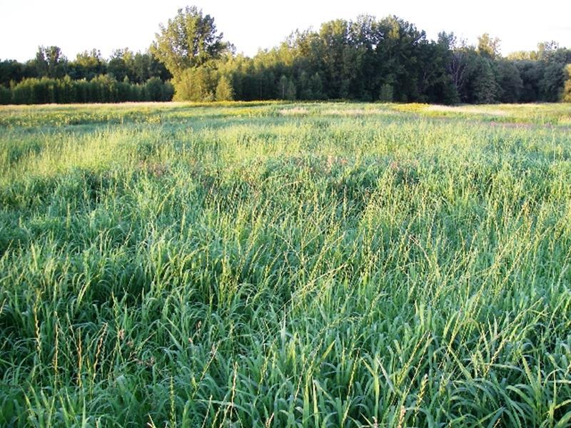 Mica 2009 Canards illimités Canada / SÉRIE HABITAT