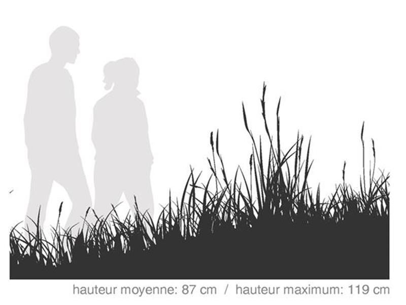 Stabilisation Indigène / SÉRIE TECHNIQUE