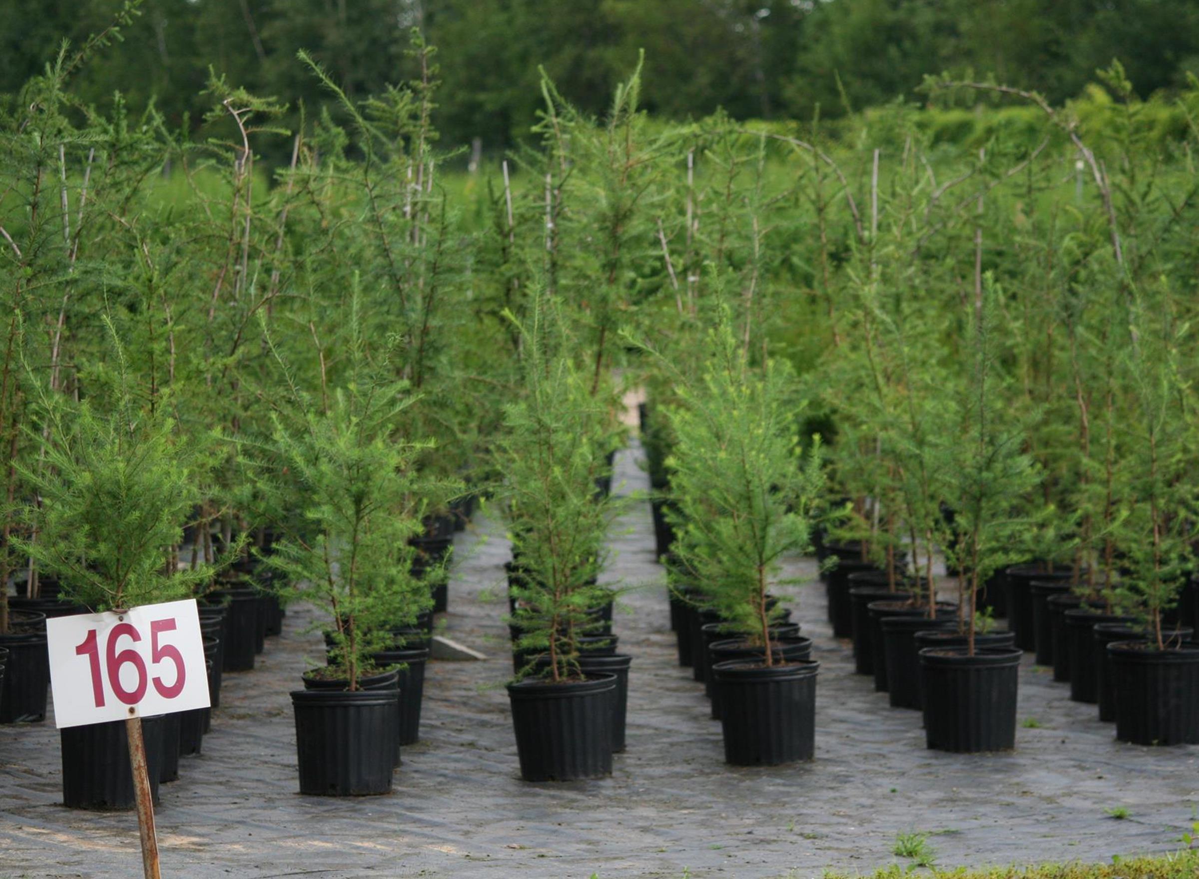 Formats disponibles - Végétaux en pots