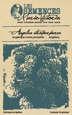 Angélique noire-pourprée