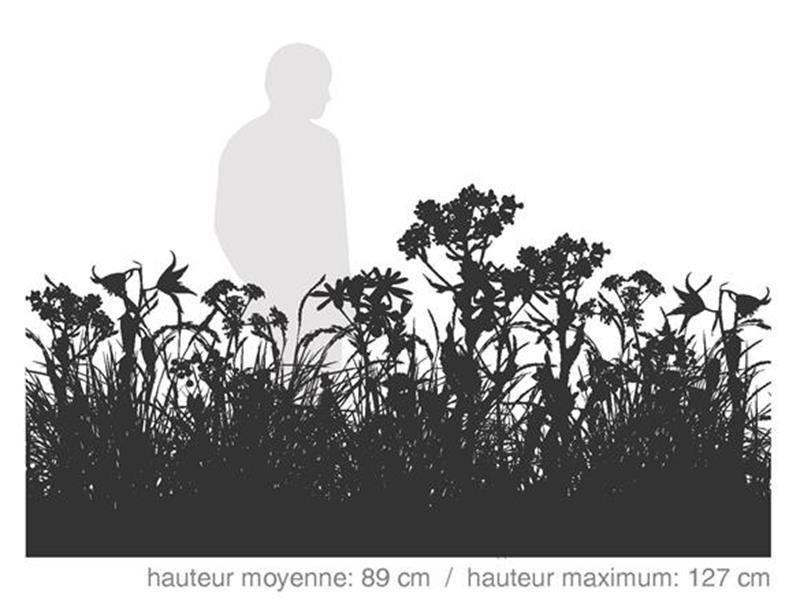 Mi-ombre / SÉRIE HABITAT